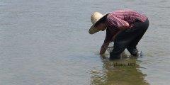 mekong-seaweed1.jpg
