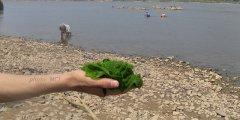 mekong-seaweed6.jpg