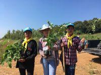 reforest-9